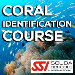 SSI Course- Coral ID