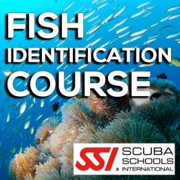 SSI Course- Fish ID