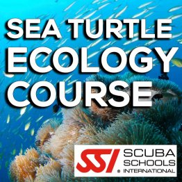 SSI Course- Sea Turtle Ecology